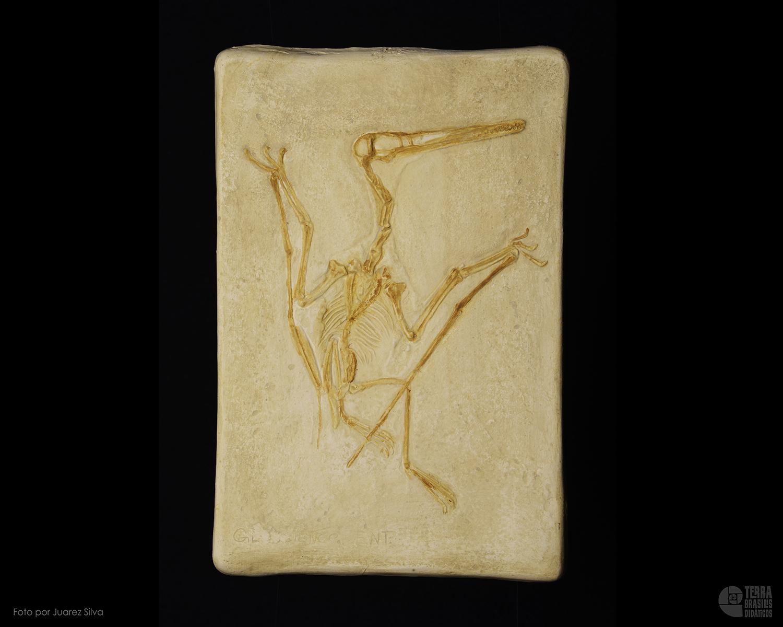 Pterodáctilo: Pterodactylus longirostris