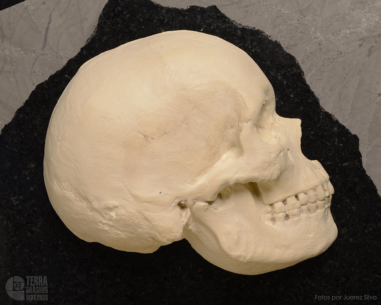 Hemicrânio direito de Homo sapiens