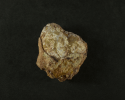 Coprólito de espinossauro